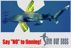 say NO to fining ! by Claudia Weber-Gebert 